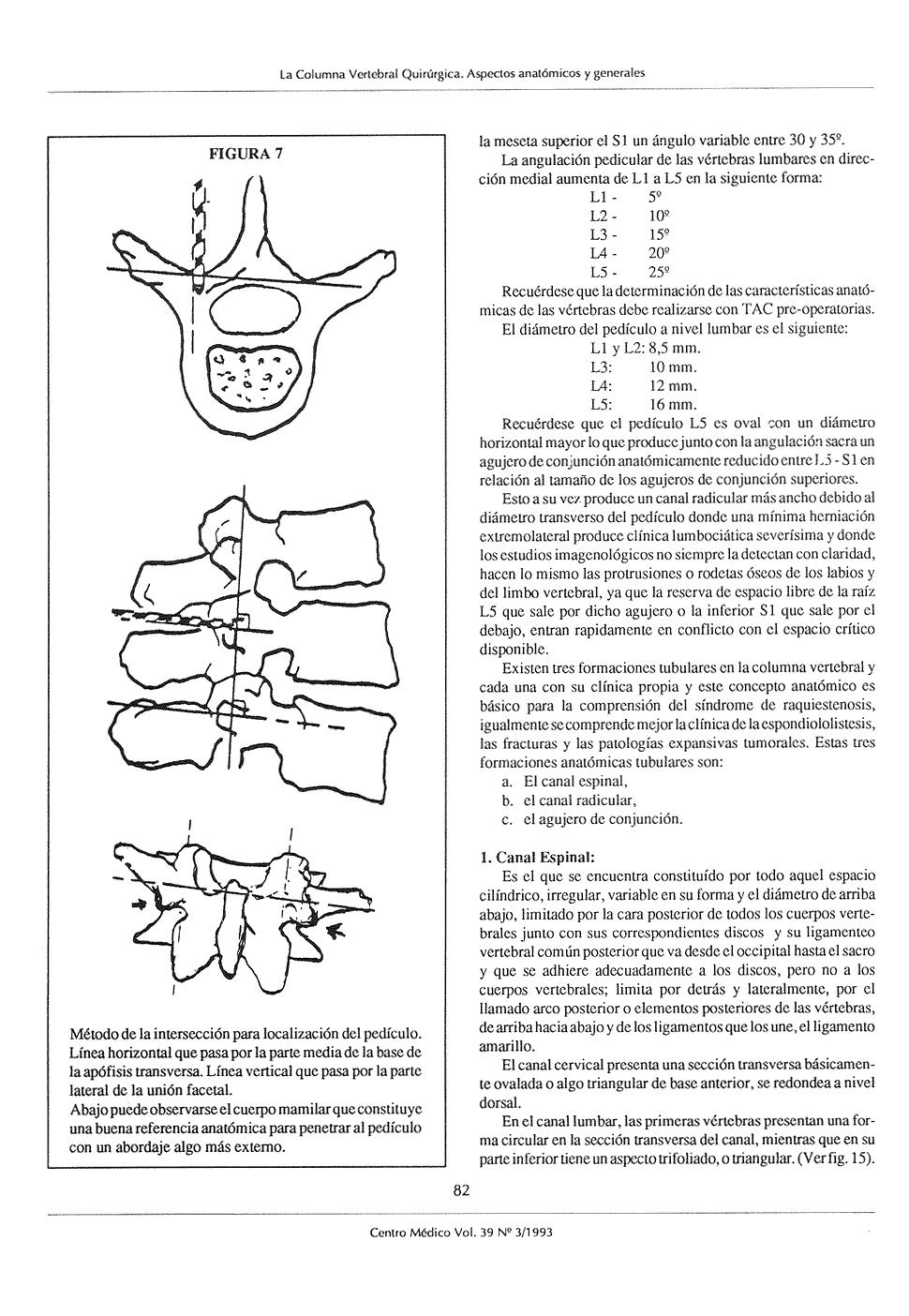 La Columna Vertebral Quirúrgica Aspectos anatómicos y generales